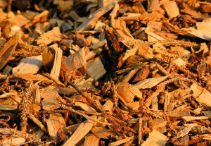 1_biomass